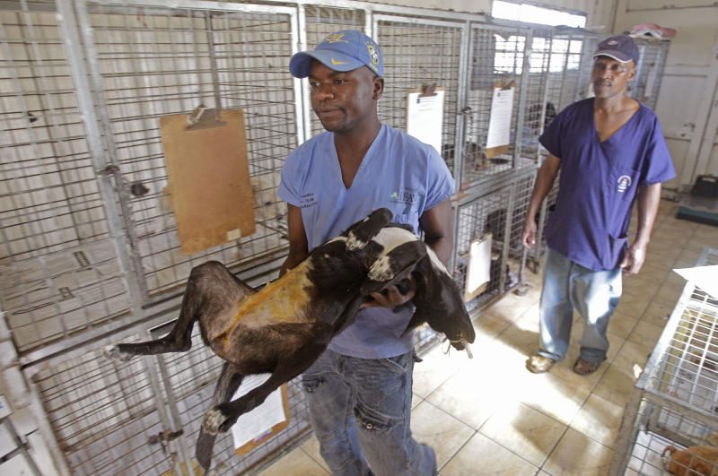In this photo taken Friday, Feb. 24, 2012, a dog is carried by a worker to undergo surgery at the Mdzananda clinic, in the Khayelitsha township near Cape Town, South Africa. The Mdzananda animal clinic helps impoversihed residents take better care of their pets. (AP Photo/Schalk van Zuydam)