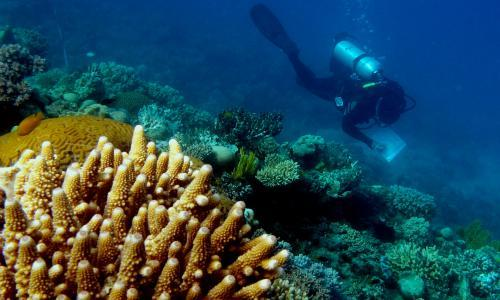 Rescuing the Great Barrier Reef: how much can be saved, and how can we do it?