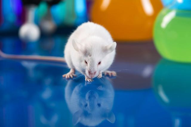 mouse immune future flu pandemic l