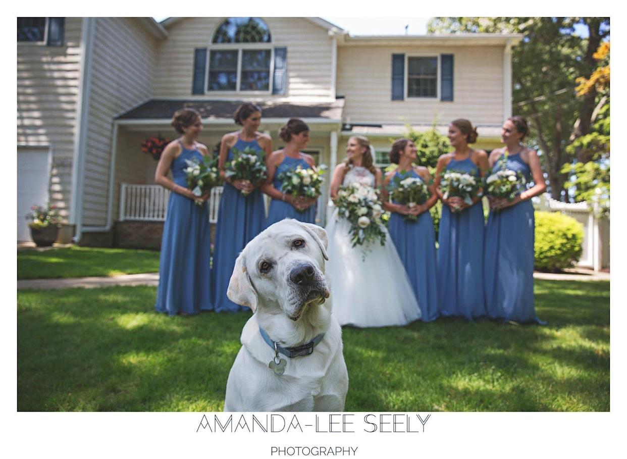 """""""Cooper stole the show at Jen and Eric's wedding in Babylon, New York."""" --&nbsp;<i>Amanda-Lee Seely</i>"""
