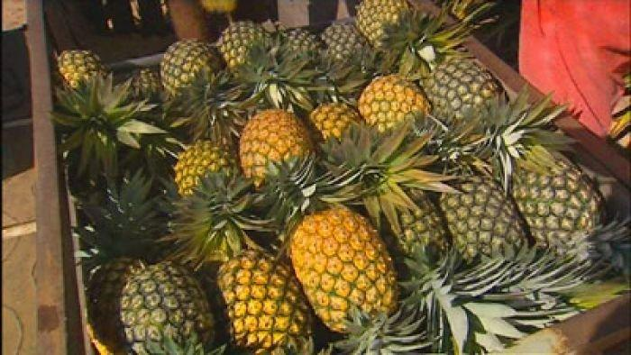 Concern Australia's pineapple industry faces foreign disease threat