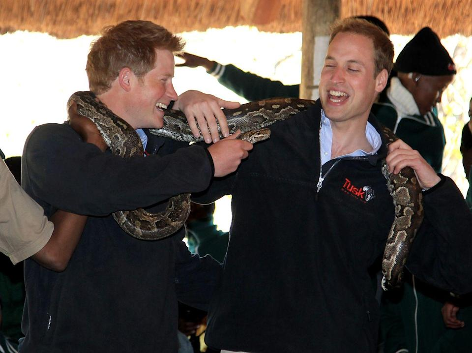 <p>What, you and your brother don't tease each other with African rock pythons? </p>