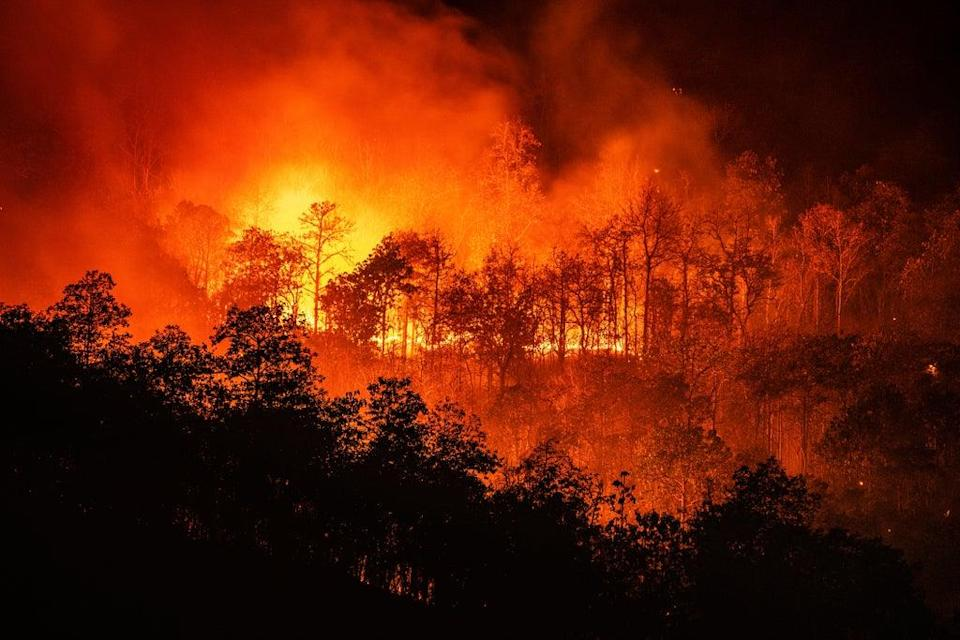Wildfires rage in Chiang Mai, Thailand (Getty Images)
