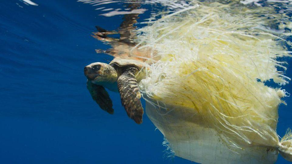 Images such as this turtle snared by plastic waste sparked a public outcry (BBC)