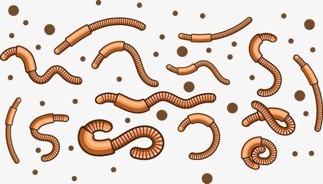 Worms In Babies & Their Natural Treatment
