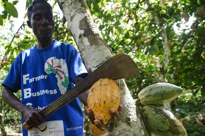 Cacao is still the mainstay of the Ivorian economy, despite impressive growth in services