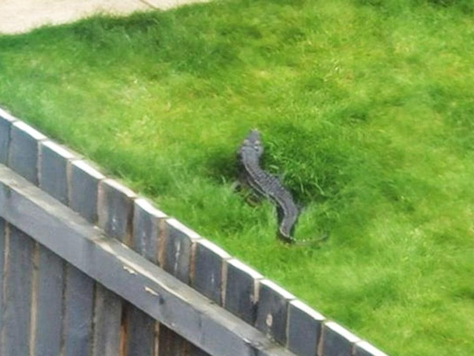 Reptile reportedly seen by the River Aire  (Sarah Jane Ellis/MEN Media)