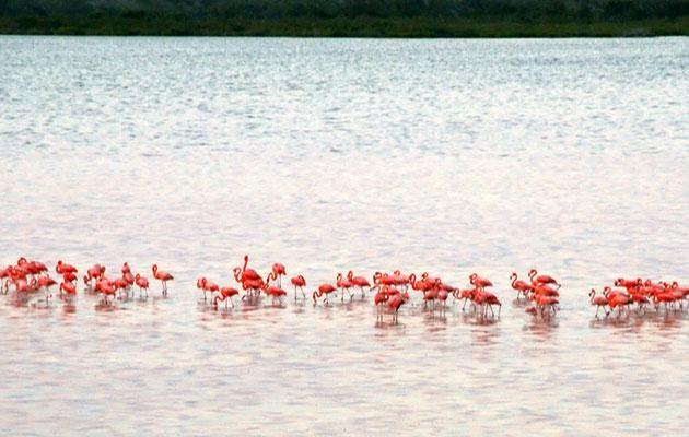 You can see flamingos from April to October. Photo: Commons