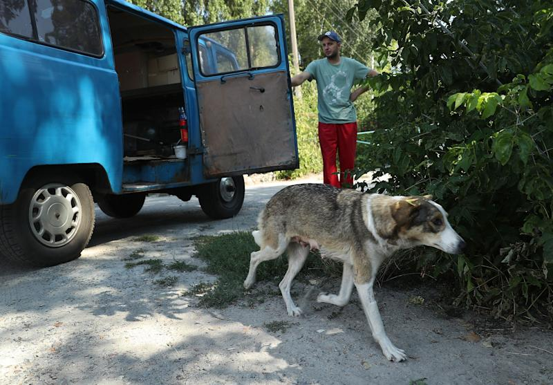 Dogcatcher Aleksander Klimov releases a stray dog back into the wild inside the exclusion zone around the Chernobyl nuclear power plant after veterinarians with the Dogs of Chernobyl initiative had tagged, spayed and vaccinated it on August 17, 2017.
