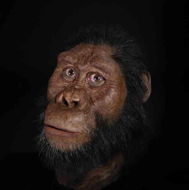 Facial reconstruction of MRD. Matt Crow, courtesy of the Cleveland Museum of Natural History. Facial reconstruction by John Gurche made possible through generous contribution by Susan and George Klein
