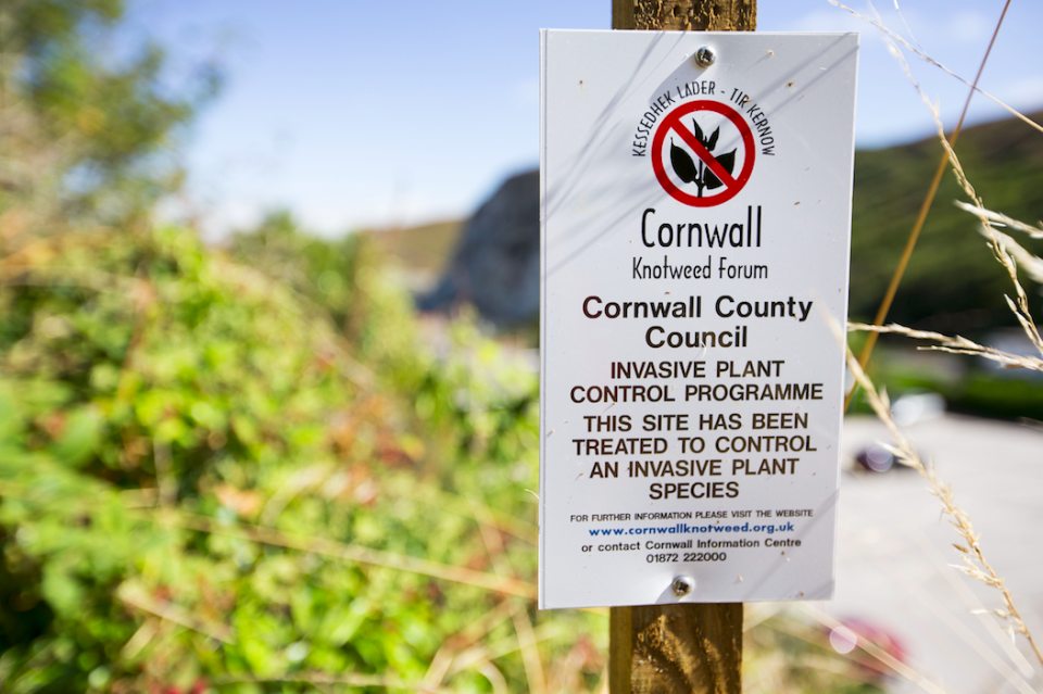 <em>A sign about knotweed control in Cornwall (Rex)</em>