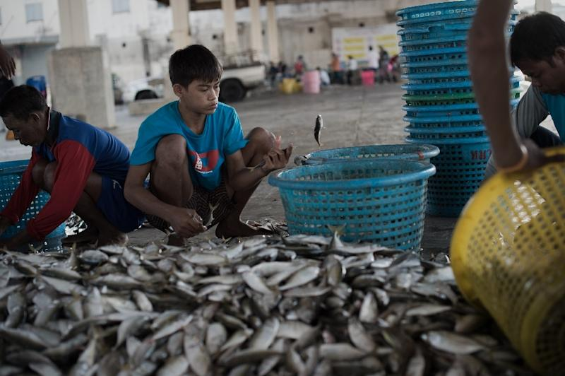 To go with Thailand-EU-fishing-economy,FOCUS by Preety Jha This picture taken on July 30, 2015 shows migrant workers sorting out fish in a port in Mahachai, on the outskirts of Bangkok. A belated Thai clampdown on illegal fishing is forcing unlicensed vessels back ashore, threatening to paralyse the key industry as the embattled kingdom desperately tries to avoid a European Union ban on exports worth $1 billion a year. AFP PHOTO / Nicolas ASFOURI (AFP Photo/Nicolas Asfouri)