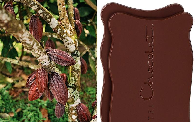 From tree to bean to bar: Hotel Chocolat's cocoa pods and Grand Slabs - Ben Quinton