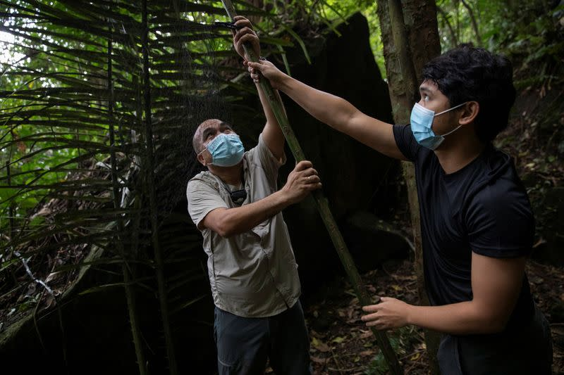 The Wider Image: By catching bats, these 'virus hunters' hope to stop the next pandemic
