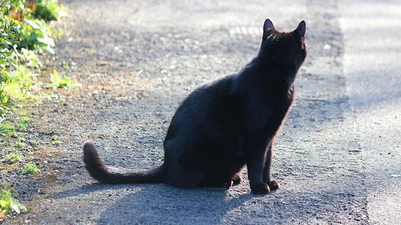 Three black cats showed up on my driveway that day. Photo: Getty Images