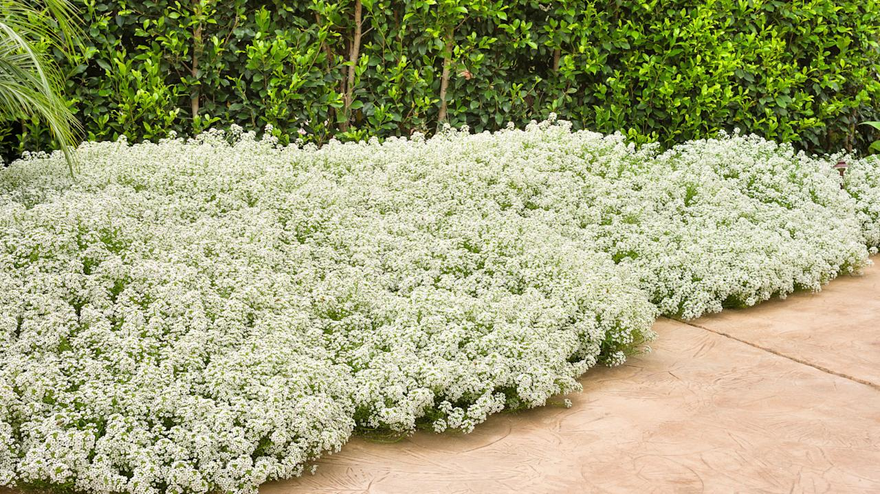 <p>These lovely perfumed plants add another level of enjoyment to your garden.</p>