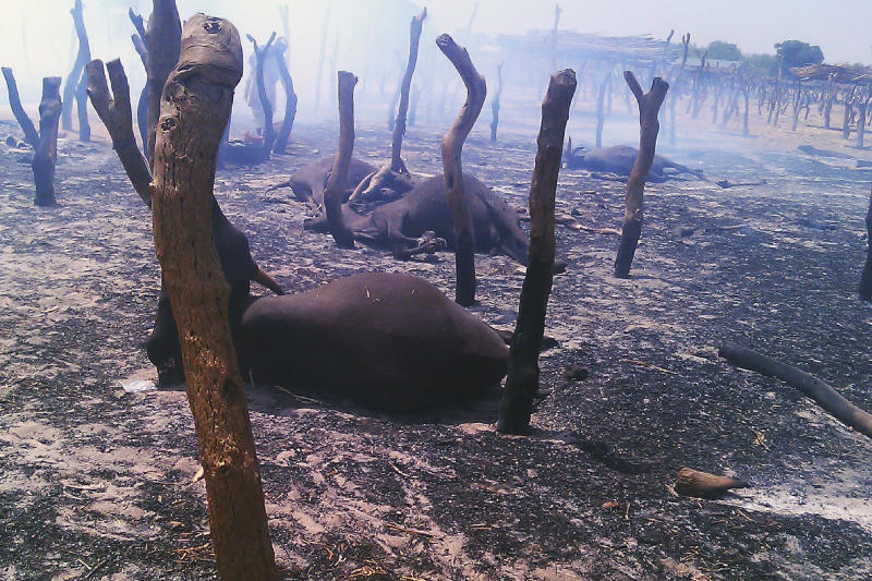 Dead cows lie amid burned posts Thursday, May 3, 2012, following a raid by gunmen in a cattle market in Potiskum, Nigeria. At least 34 people were killed after a failed cattle raid on Wednesday in the northeast Nigeria market sparked a retaliatory attack by robbers angry one of their colleagues had been burned alive by herders, an official and witnesses said Thursday. (AP Photos/Adamu Adamu)