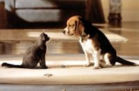 """<p><strong>Hulu's Description:</strong> """"A look at the top-secret, high-tech espionage war going on between cats and dogs, which their human owners are blissfully unaware of.""""</p> <p><span>Stream <strong>Cats & Dogs</strong> on Hulu!</span></p>"""