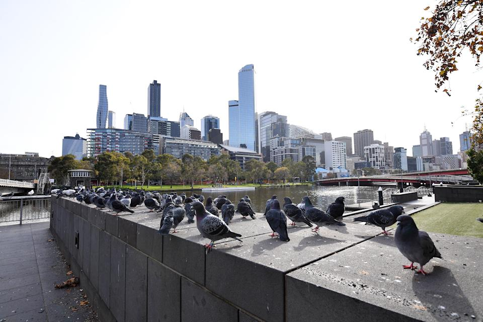 Pigeons are seen along Southbank in Melbourne, Saturday, June 5, 2021.