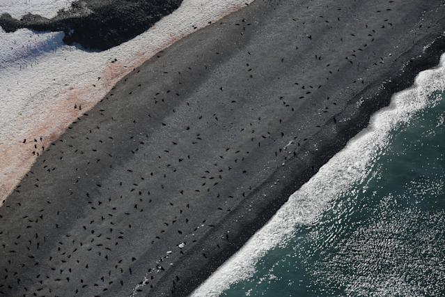 """Seals lie on a beach in Half Moon Bay, Antarctica, February 18, 2018. REUTERS/Alexandre Meneghini SEARCH """"ANTARCTICA"""" FOR THIS STORY. SEARCH """"WIDER IMAGE"""" FOR ALL STORIES. TPX IMAGES OF THE DAY"""