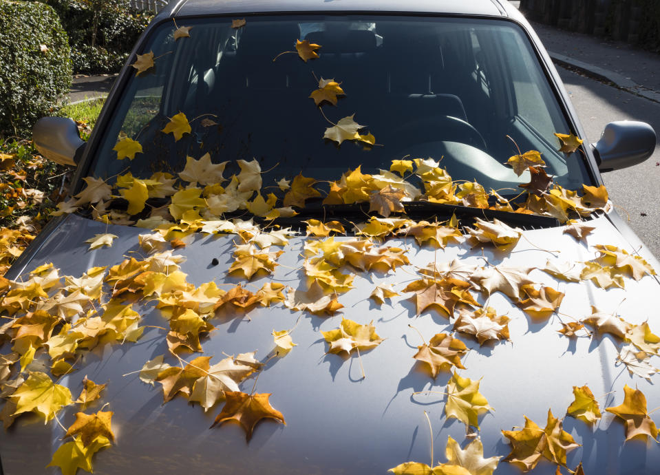 The hood of a parked car is covered with colorful leaves fallen down from trees