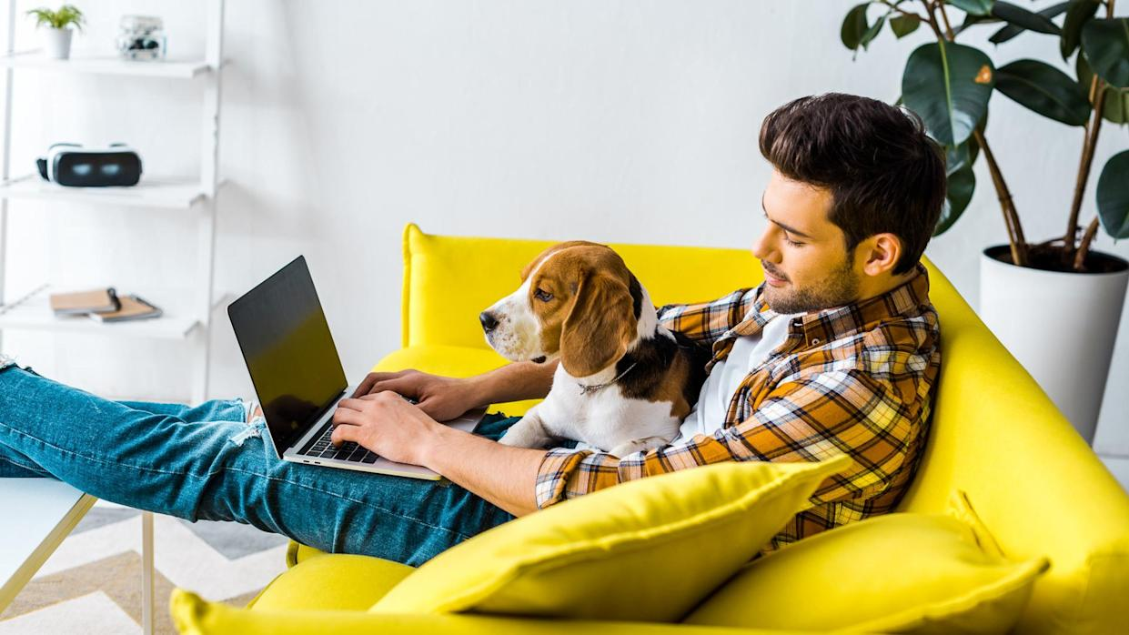 handsome man using laptop on yellow sofa with beagle dog.