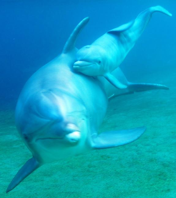 Dolphin Birth Caught in Amazing Underwater Video