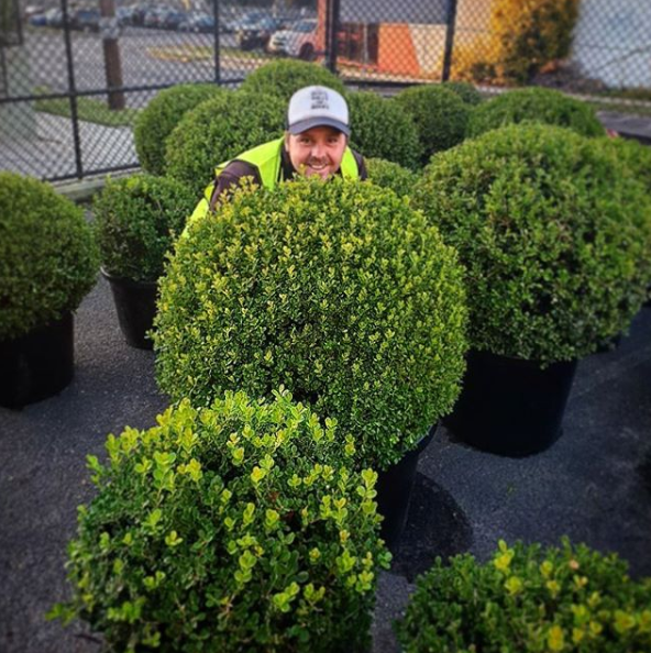 Jason grows and sells Buxus plants from a plot in Berry, NSW. Photo: Instagram/jasonhodgesandco.