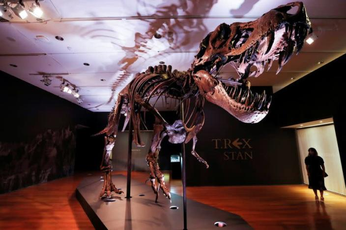 "FILE PHOTO: Tyrannosaurus Rex skeleton ""STAN"" on display ahead of being auctioned by Christie's in New York"
