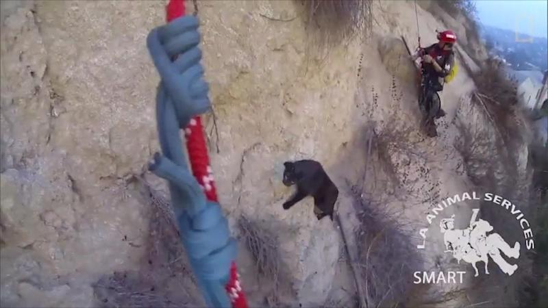 Pet Cat Rescued After Becoming Trapped on 100-Foot Cliff