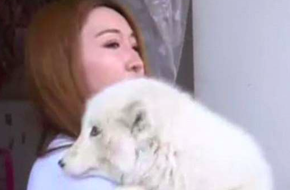 Ms Wang bought the animal a year ago (Picture: Shanxi TV)