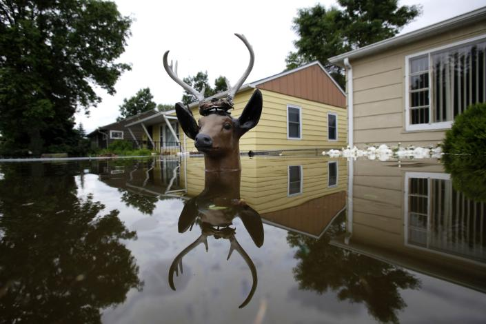 The head of a lawn deer remains above the waters from the Souris River in an evacuated western neighborhood of Minot, N.D. Friday, June 24, 2011. About one-fourth of the city's 40,000 residents have evacuated their homes (AP Photo/Charles Rex Arbogast)