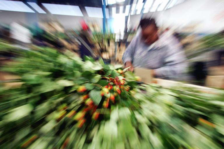 Flower power: Kenya is the world's expert at growing delicate blooms and rushing them to Europe in refrigerated cargo -- the same conditions as for Covid vaccines