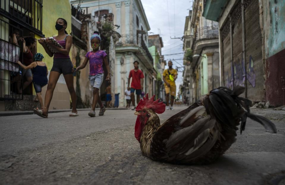 "Pedestrians wearing face masks amid the new coronavirus pandemic walk past a rooster named ""Espartaco,"" or Spartacus, sitting in the middle of a street in Havana, Cuba, Tuesday, Oct. 27, 2020. Few countries in Latin America have seen as dramatic a change in U.S. relations during the Trump administration or have as much at stake in who wins the Nov. 3rd presidential election. (AP Photo/Ramon Espinosa )"