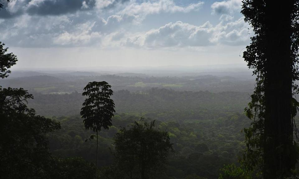 The Amazon rainforest in Amapa State, Brazil.