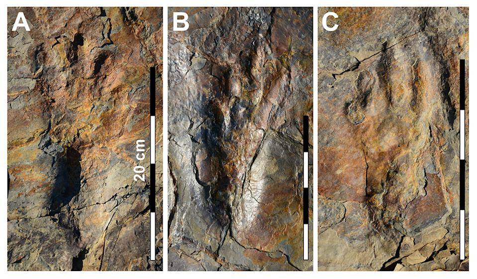 Preserved in the rock: The smaller toes are actually the inner numbers of the feet