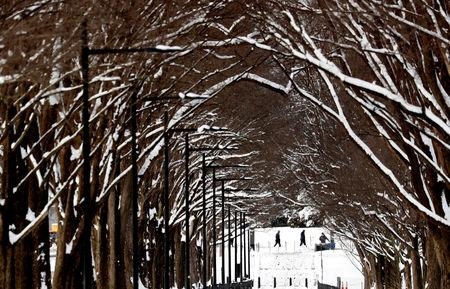 Trees are covered in snow along the National Mall, following the weekend winter storm, in Washington, U.S., January 14, 2019. REUTERS/Kevin Lamarque
