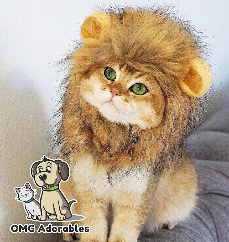 "Get this <a href=""https://amzn.to/2H5hI4p"" target=""_blank"" rel=""noopener noreferrer"">OMG Adorables Lion Mane Costume for Cat for $13</a> at Amazon. It's available in sizes small and large, and fits snuggly around your feline's face."