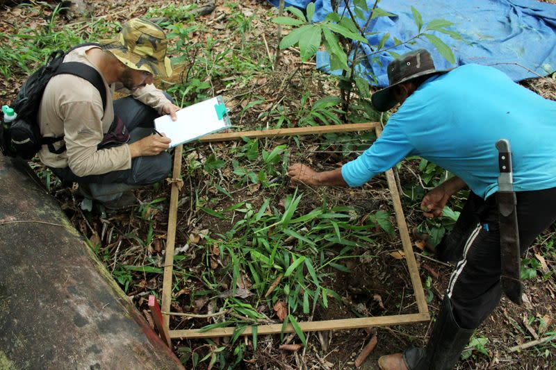 Silveira, a forestry engineering professor at the Federal University of Rondonia, and botanist Oliveira count smaller plants in Itapua do Oeste