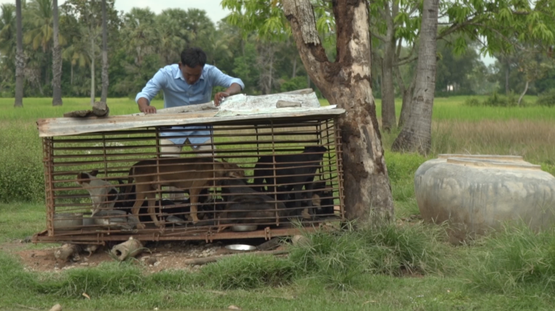 A man stands over a cage of dogs on the farm outside of Phnom Penh.
