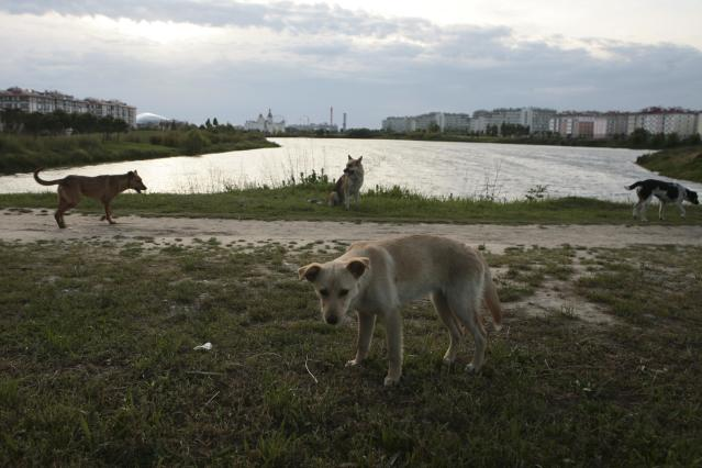 Stray dogs are seen at a park, with the Fisht Stadium seen in the background, in Sochi, the host city for the 2018 FIFA World Cup, Russia May 18, 2018. REUTERS/Kazbek Basayev