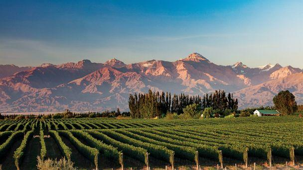 PHOTO: The Andes form a backdrop for grape vines in Mendoza's Uco Valley. (National Geographic/David Noton Photography)