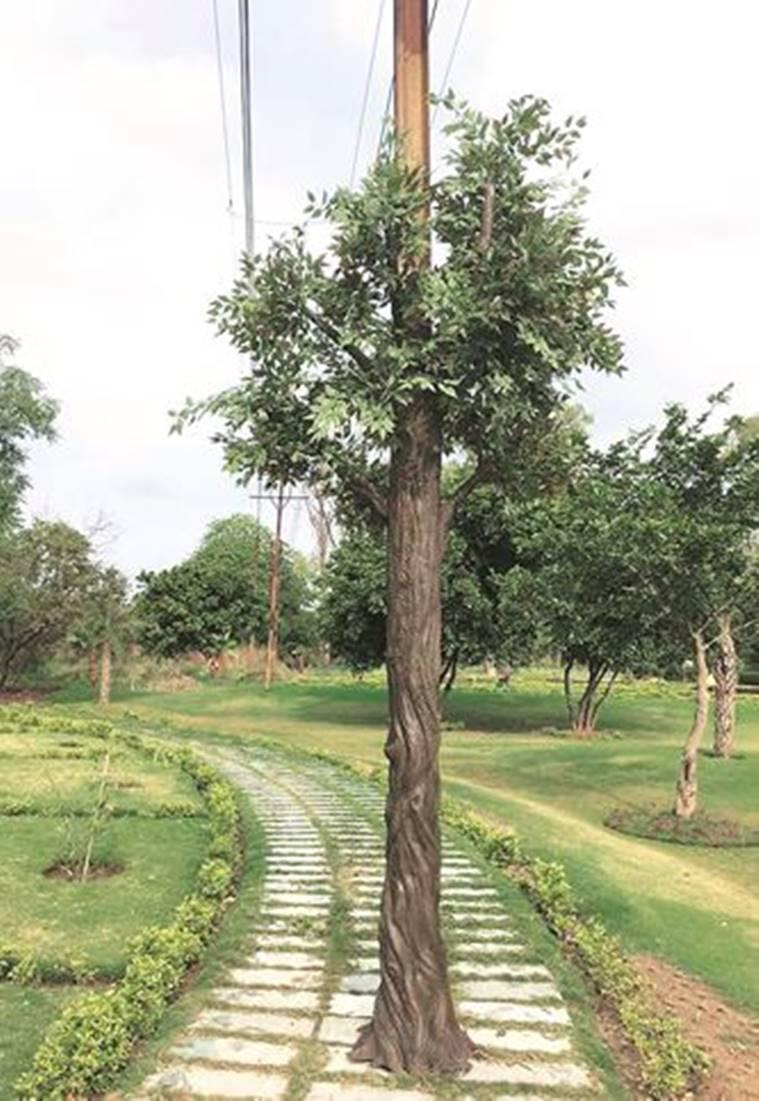 Nagar Van, Sukhna Lake, Chandigarh electricity poles to look like trees, chandigarh news, indian express