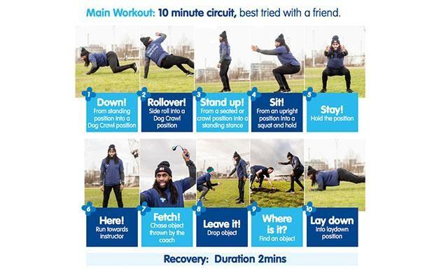 The UK based charity has kindly helped out with a workout sheet for you to try it at home. Photo: www.bluecross.org.uk/work-out-dog