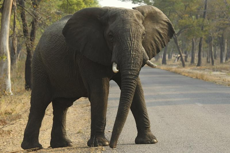 55 Elephants Starved to Death in Two Months in Zimbabwe's Biggest National Park