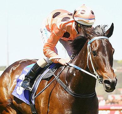 Black Caviar's little brother sells for record price