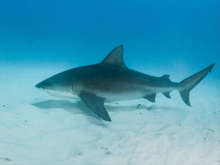 Pregnant woman saves husband from shark attack in Florida (Getty Images/iStockphoto)
