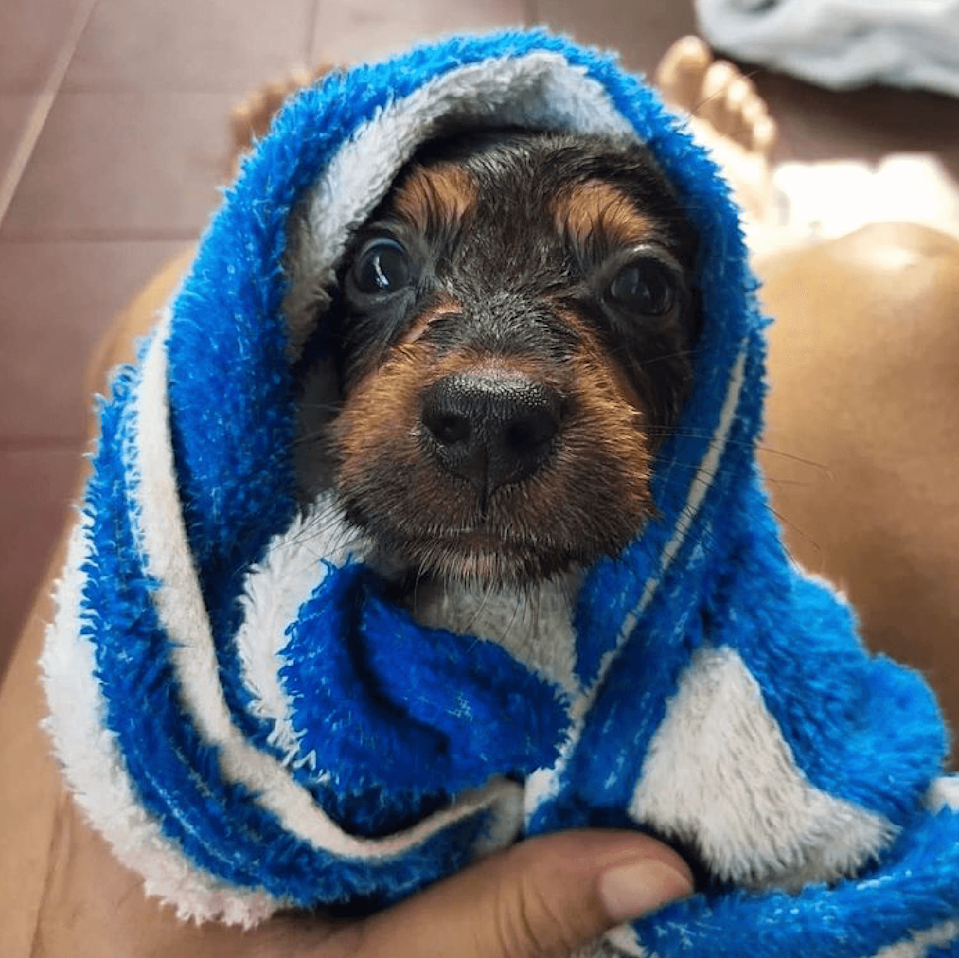 <p>Picasso looks incredibly cosy after his bath. </p>