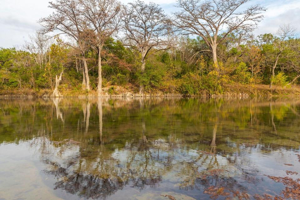 Scenic view of lake in forest against sky, New Braunfels, Texas