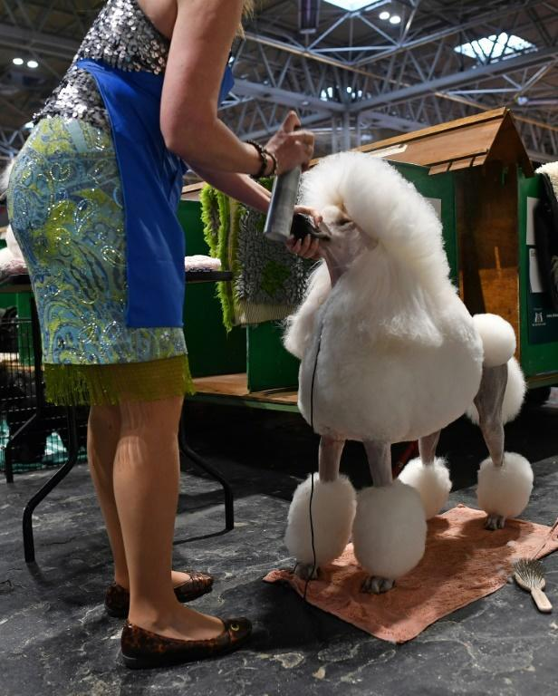 Last year, 3,000 dogs came to Crufts from overseas. Italy was due to send 366 this year, but they may not come as it tackles the worst coronavirus outbreak in Europe